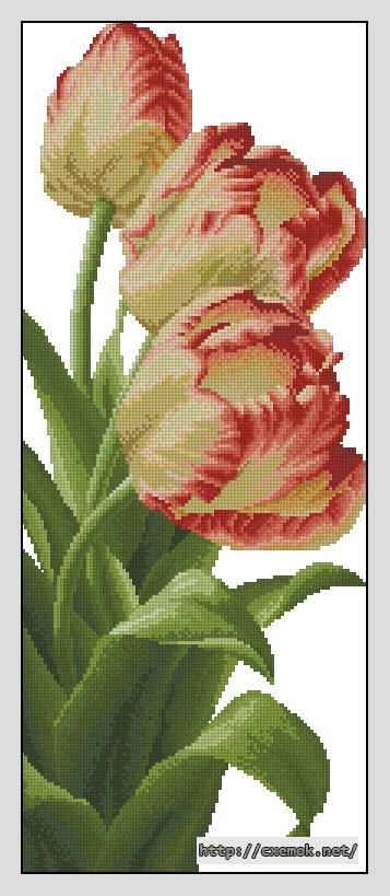 Три тюльпана106x260 крестов31