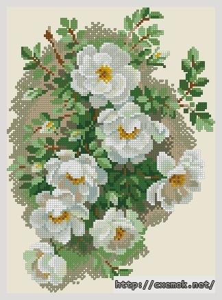 Белый шиповник103x140