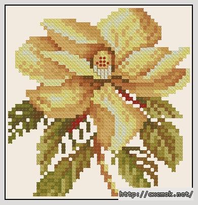 Magnolia classic51x53