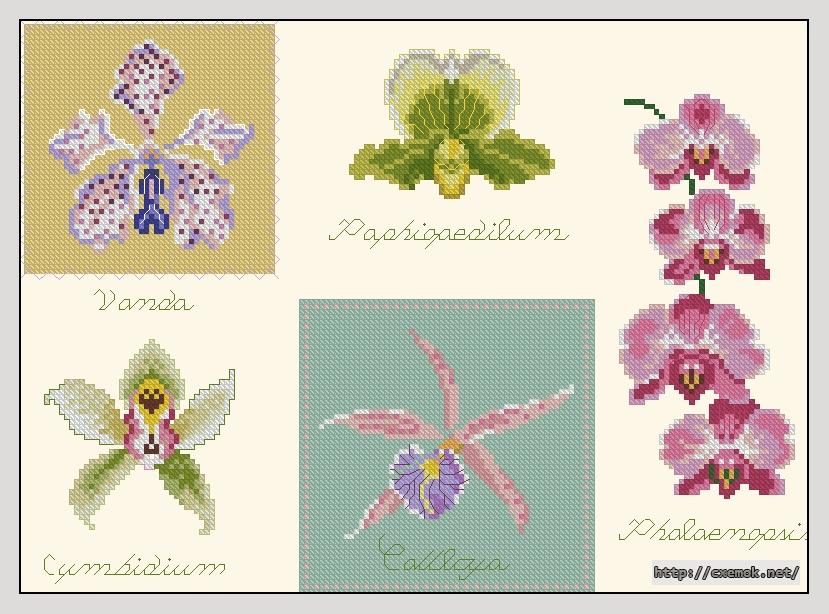 Orchids158x115