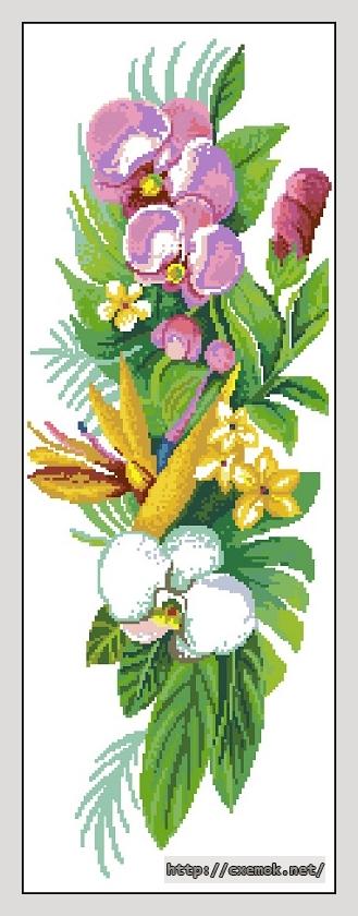 Орхидеи20x56 крестов29 цветов