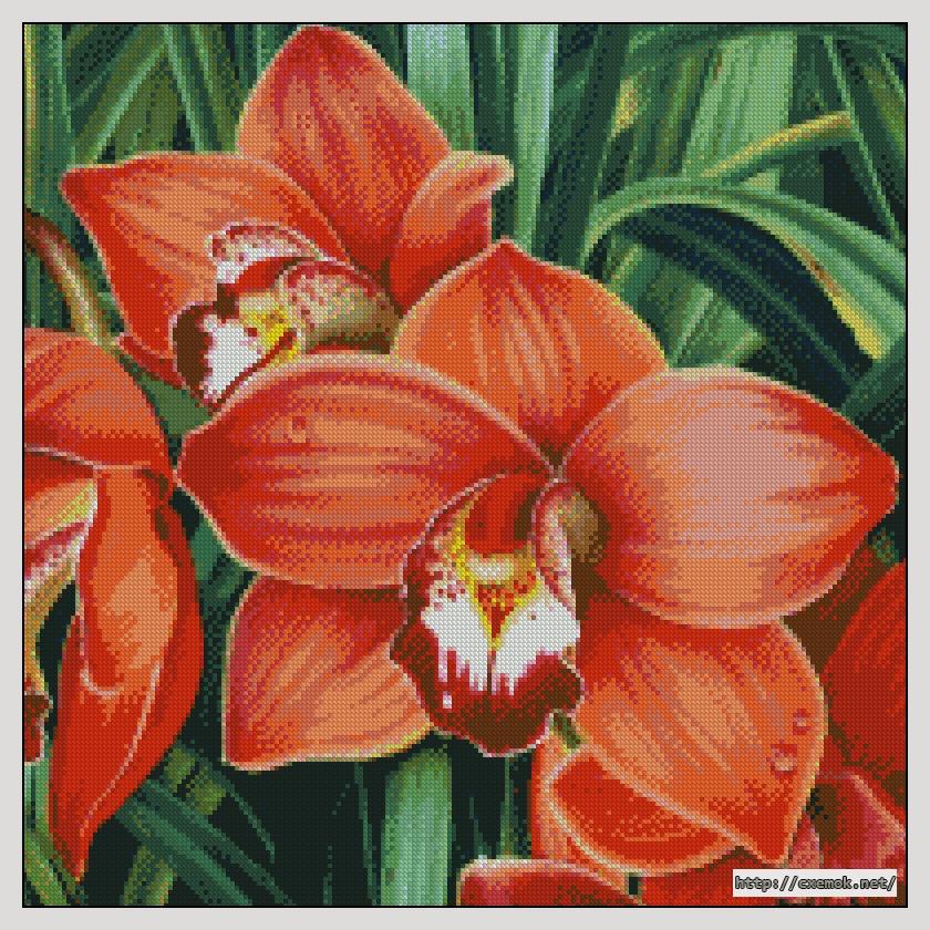 Красная орхидея200x200