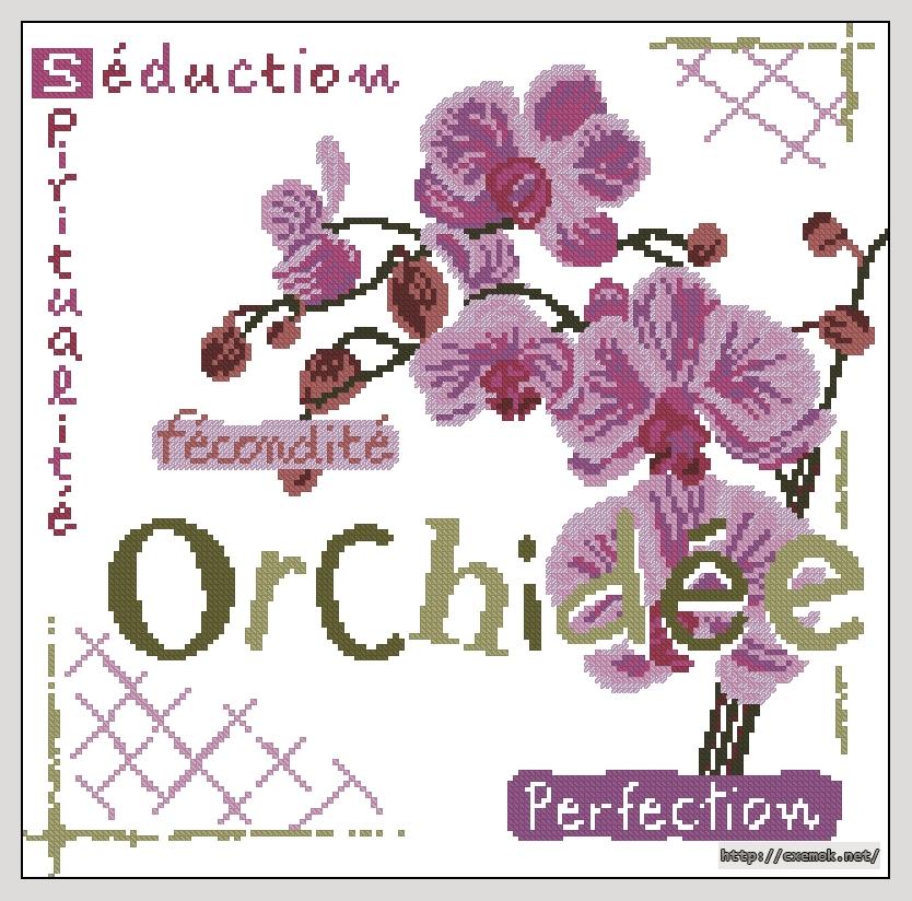 Orchidee159x157