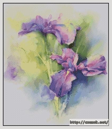 Ирисы. фиолетовое чудо.200x233