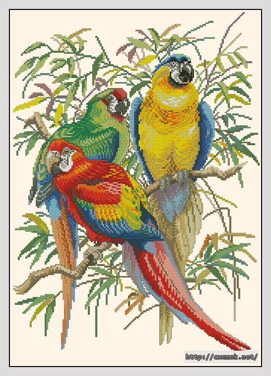 Parrots165x232