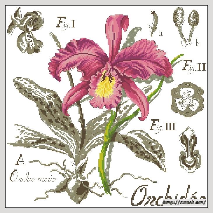 Orchidee174x174