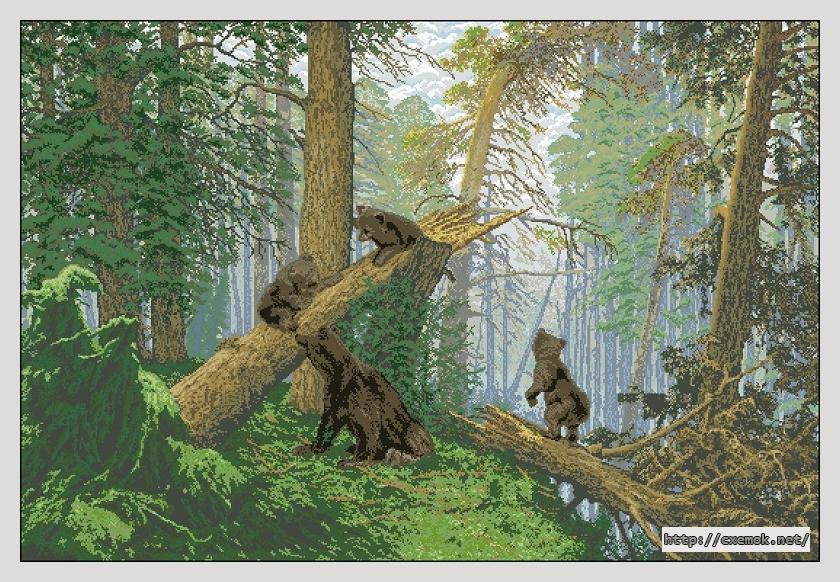 Утро в сосновом лесу550x373