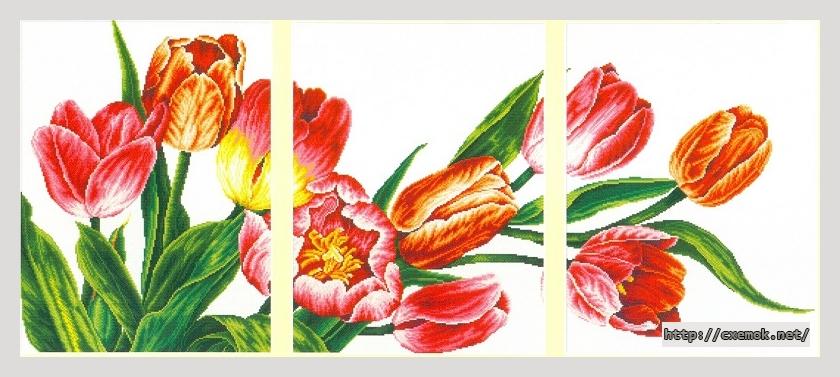 Тюльпаны510x230 крестов27